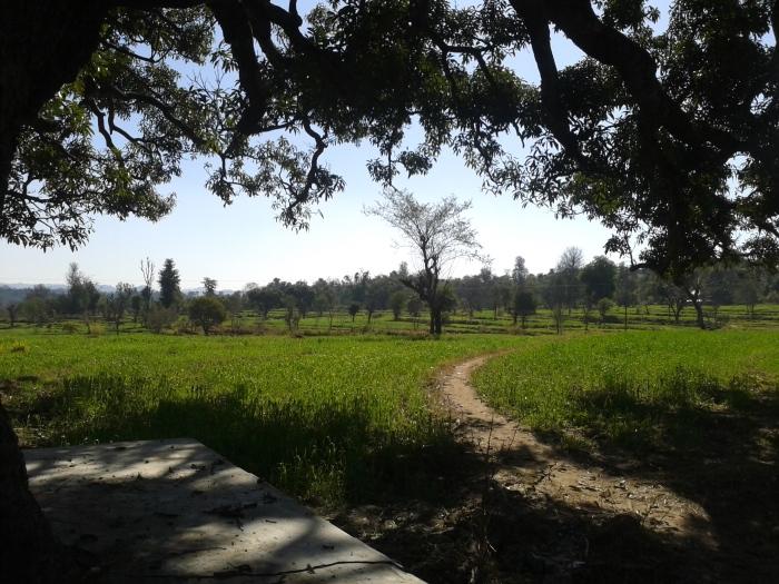 From beneath a banyan tree where the village seniors gather, Sunhi.