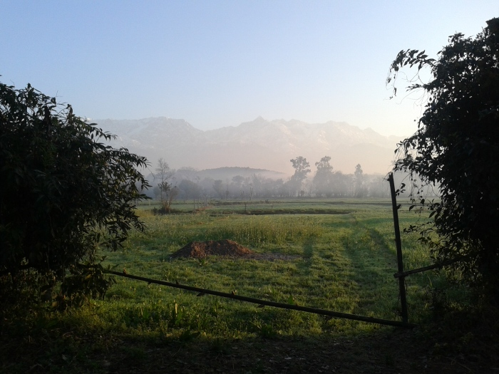 A view of the Himalayas across the fields, Kangda.