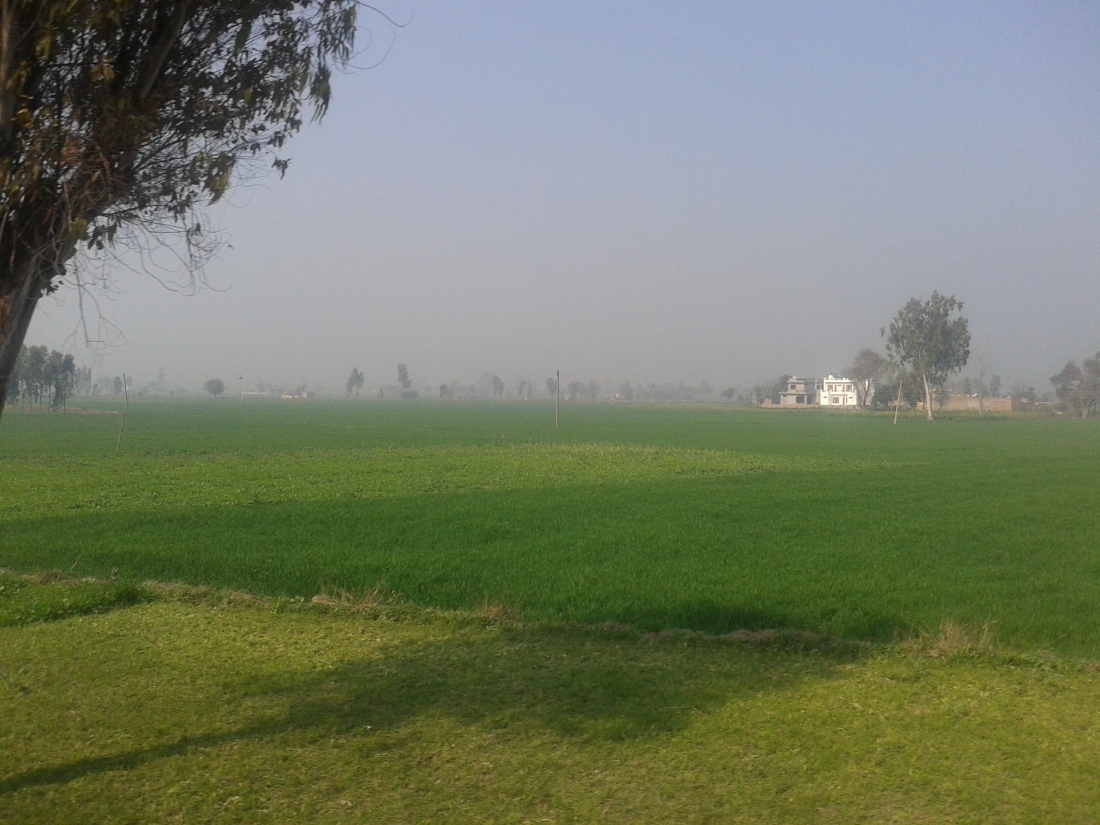 The fertile fields of Punjab.